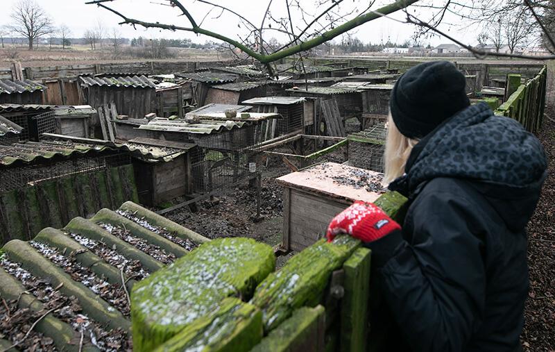Polska branża futrzarska w największym kryzysie od lat! Tak źle jeszcze nie było!