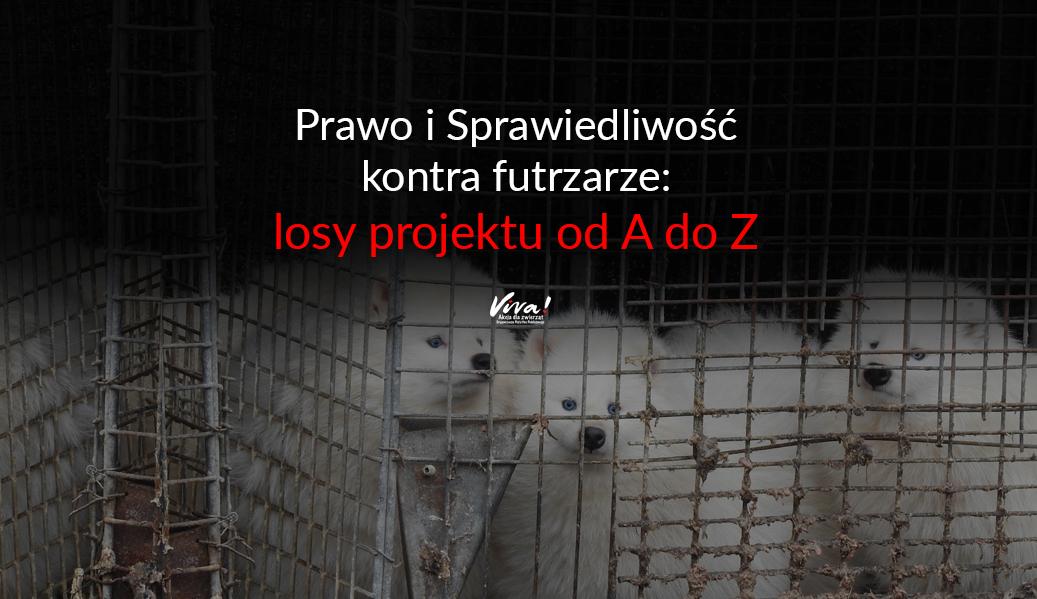 PiS kontra futrzarze, czyli o losach projektu od A do Z