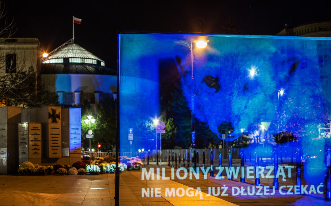 """Hologramowa odezwa do posłów i Kaczyńskiego w sprawie """"piątki dla zwierząt"""""""